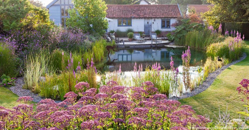 Fancy a dip? We look at why people are choosing swimming ponds over the traditional garden pool