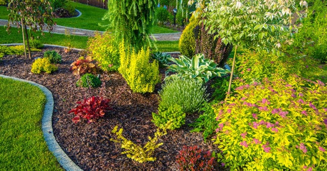 Shape up – How to improve your garden!